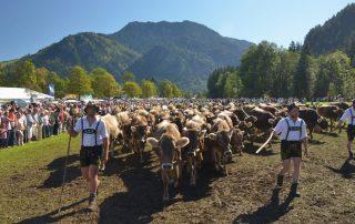 Hindlanger Viehscheid